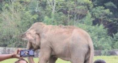 Único elefante do Zoo de Sapucaia morre