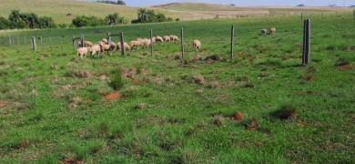 sema-emite-primeira-certificacao-do-programa-campos-do-sul-para-propriedade-rural-em-alegrete
