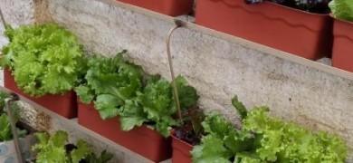 projeto-olhar-atento-abrange-34-instituicoes-de-bento-com-plantio-em-hortas-escolares